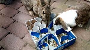 Kaninchenkäfig Für 2 Kaninchen : besch ftigung aus kartons f r kaninchen youtube ~ Frokenaadalensverden.com Haus und Dekorationen