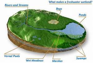 Ecosystem Diagram