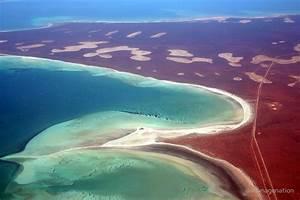 """""Shell Beach"" Shark Bay, Western Australia"" by"