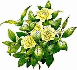 Gardenia Jasminoides Pflege : gardenia gardenie zimmerblumen ~ A.2002-acura-tl-radio.info Haus und Dekorationen