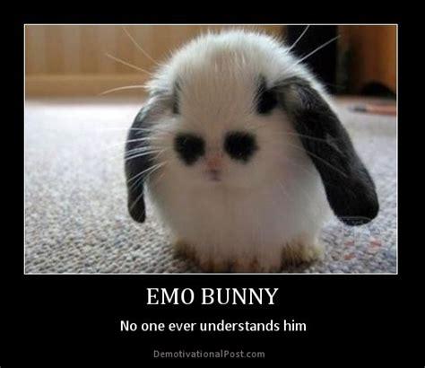 Bunny Memes - rabbit ramblings funny bunny memes