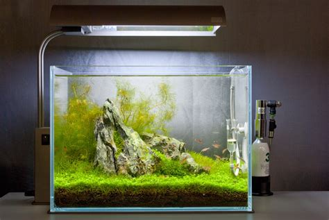 Aquascape Design Layout by Aquatic Layout Guide Of Composition The Golden