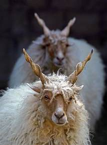 Beautiful Animals with Horns
