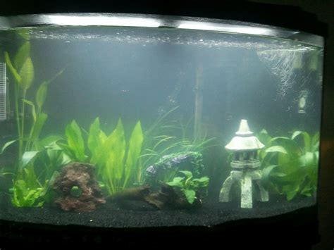 why is my fish tank cloudy 10 gallon fish tank is cloudy 10 gallon tank why is my fish tank cloudy and how can i fix