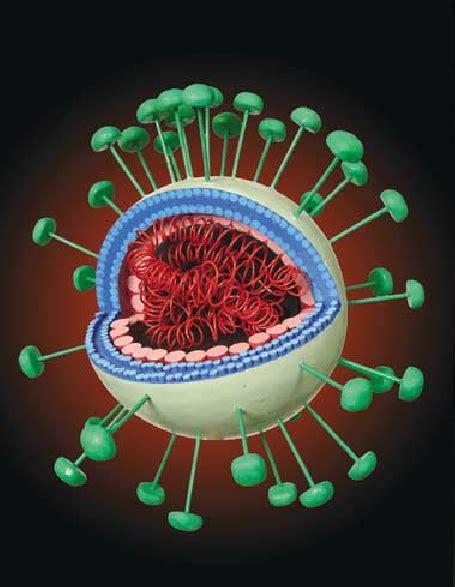 Severe Acute Respiratory Syndrome Coronavirus