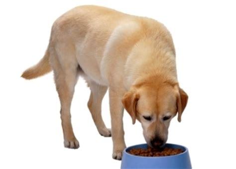 dog food allergies symptoms  pets central