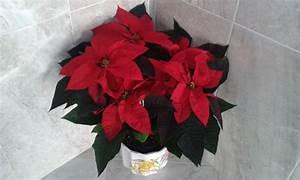 Stella Di Natale La Leggenda Della Stella Di Natale With Stella Di Natale Elegant Tutorial
