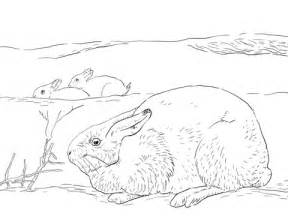 arctic hares coloring page supercoloringcom