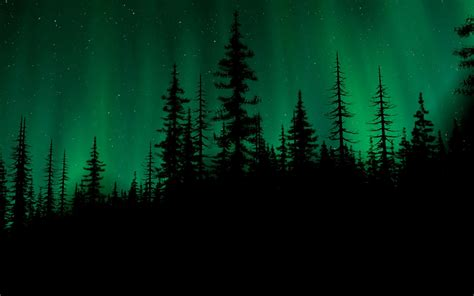 Start your search now and free your phone. Night. | Northern lights wallpaper, Dark forest, Northern lights tattoo