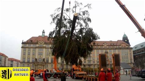 weihnachtsbaum f 252 r den dresdner striezelmarkt youtube