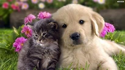 Dogs Cats Desktop Wallpapers