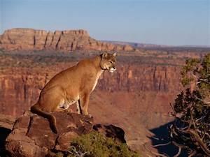 The Biggest Animals Kingdom: Agustus 2012