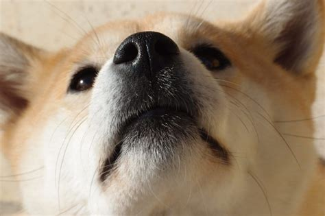 Dogecoin Price Predictions: Is the Meme Currency Still ...