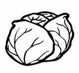 Cabbage Coloring Coloringcrew sketch template