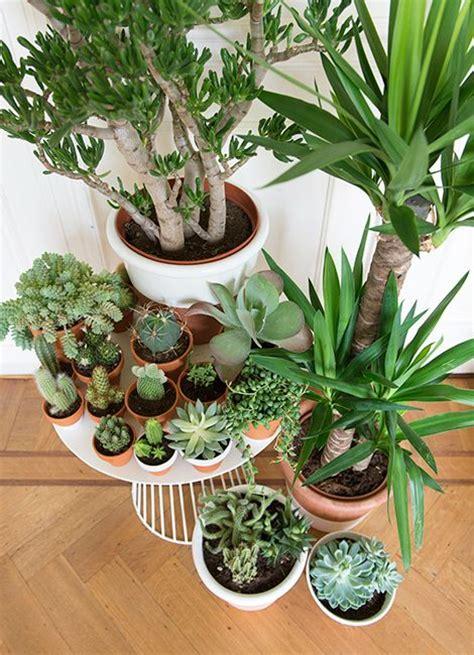 potting succulents indoors onze mini tuin mag beginnen groeien www woonblog be greens pinterest gardens my goals