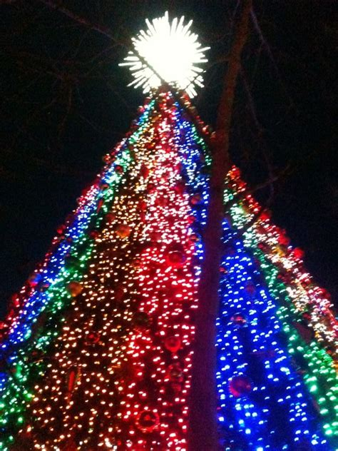 christmas tree at silver dollar city silver dollar city pinterest