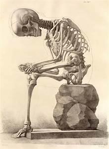 A Nostalgic Halloween: Vintage Skeleton Illustration