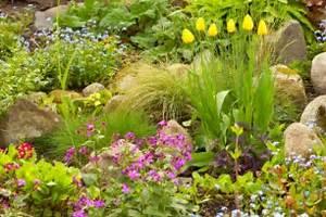 Welche Pflanzen Passen Gut Zu Hortensien : tulpen kombinieren welche pflanzen passen gut zu ihnen ~ Heinz-duthel.com Haus und Dekorationen