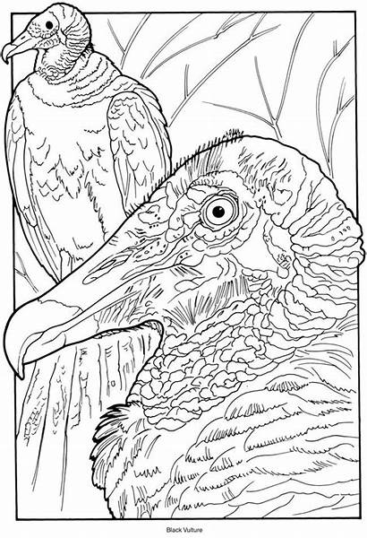 Coloring Pages Exotic Birds Adult Creative Bird