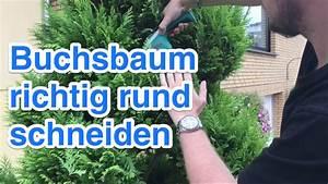 Buchsbaum Rund Schneiden : buchsbaum b sche und b ume kugelf rmig rund schneiden youtube ~ Frokenaadalensverden.com Haus und Dekorationen