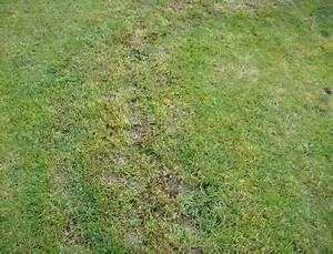 Trockene Stellen Im Rasen : news ~ Markanthonyermac.com Haus und Dekorationen