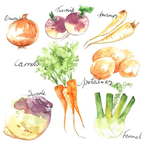 cuisine illustration watercolour food objects based fashion