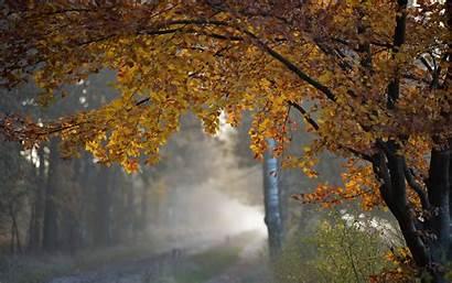 Rain Autumn Fall Falling Wallpapers Roads Trees