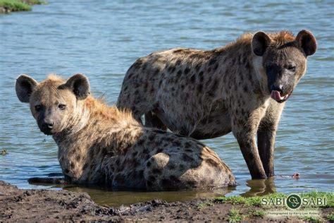 carnivores understanding roberg lee