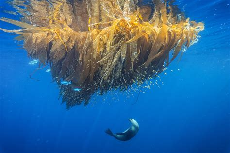 Why It's Important To Save Our Seas' Pristine Places
