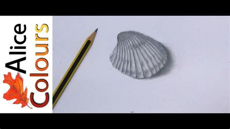 drawing  seashell  graphite youtube