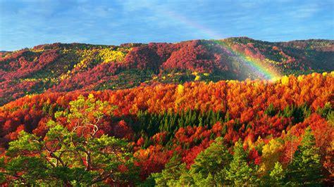 Autumn Forest Trees Zakarpattia Obla... Wallpaper #14158