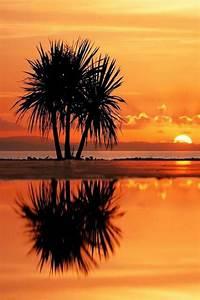 Richtig Coole Bilder : 42 richtig einzigartige bilder von palmen ~ Eleganceandgraceweddings.com Haus und Dekorationen