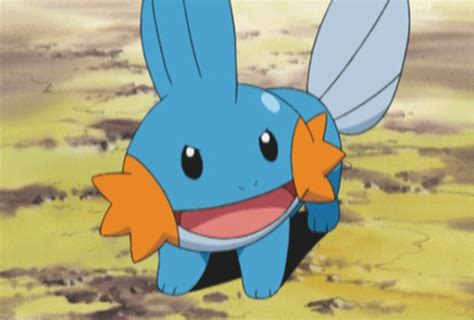mudkip in the real world pok 233 mon amino