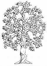 Tree Coloring Pages Magic Cartoon sketch template