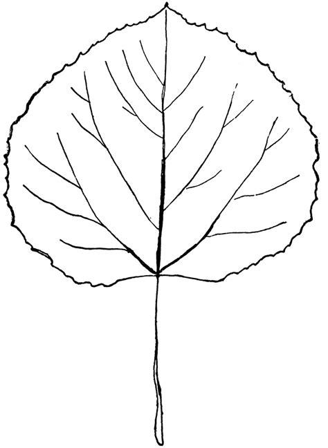 simple tree outline   clip art