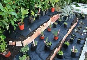 steingarten anlegen in 5 schritten obi anleitung With garten planen mit wasserspender für zimmerpflanzen selber machen