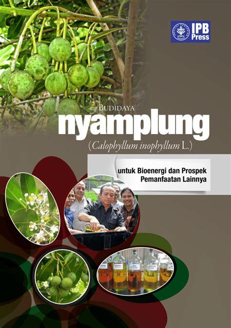 budidaya tanaman nyamplung calophyllum inophyllum