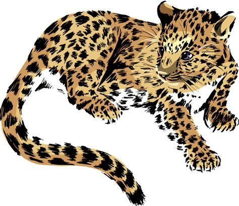 baby leopard clipart jaguar animal clipart 59