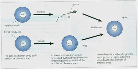 types biology notes for igcse 2014
