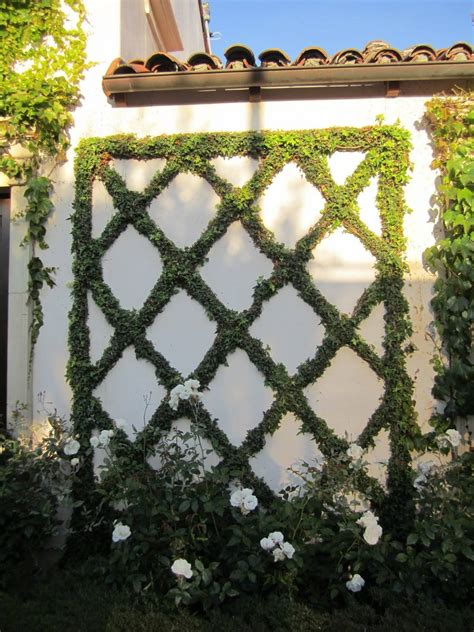 espalier vines landscape ideas small space solutions espaliered trees and vines