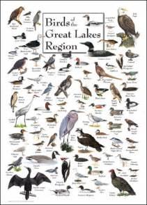 Minnesota Bird Identification Chart