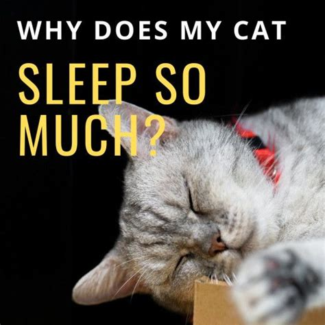 why cats sleep much cat pethelpful sleeping