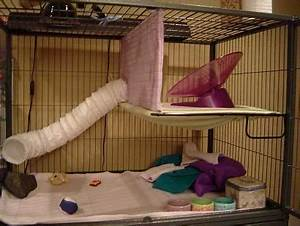 Cage Setup Examples - Hedgehog Central – Hedgehog pet care ...