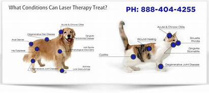 Laser Therapy Canine Medx Cold Feline Uses