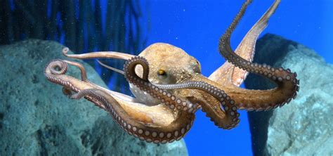 aquarium barcelona tickets experience catalunya