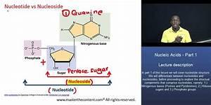 Mcat U00ae  Nucleic Acids Part 1  U2013 Difference Between