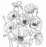 Poppies Coloring sketch template