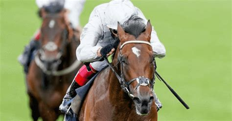 Ascot Champions Day Preview | NewBettingOffers.co.uk