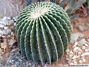 Cactus Sans Epine : coussin de belle m re sans pines echinocactus grusonii ~ Melissatoandfro.com Idées de Décoration