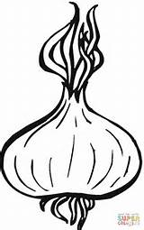 Onion Coloring Onions Drawing Pages Printable Supercoloring Apple Clipart Template Garlic Crafts Vegetables Plant Vegetable Sketches Getdrawings Paper Three Categories sketch template